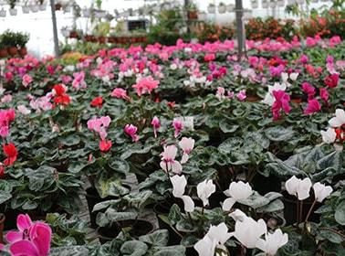 Сезонни растения