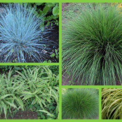 Тревисти растения