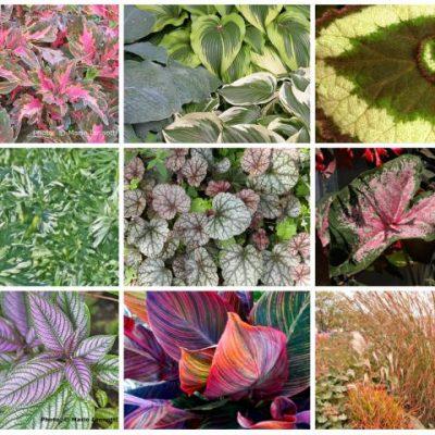 Листно декоративна растителност